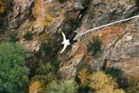Бънджи скокове - моста край Клисура